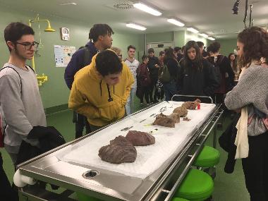Alumnes de primer de batxillerat IES Santa Margalida a la sala de dissecció